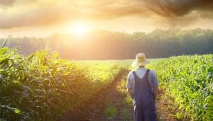фермер на кук поле
