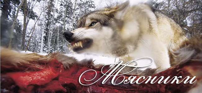 Волк над тушей