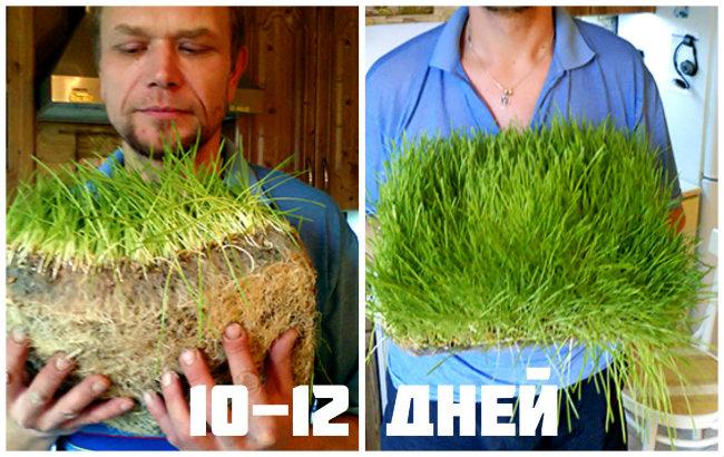 Ошибки при проращивании семян. Плесень на корнях